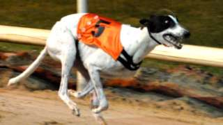 Clares Rocket: Arrests in '1m euro greyhound' theft