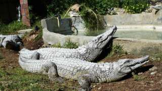 Tunis zoo to close temporarily after visitors stone crocodile