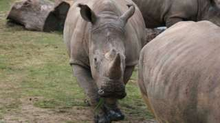Poachers kill rhino for his horn at French zoo